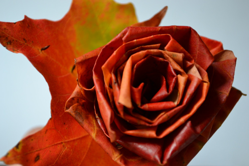 Maple Leaf Roses Tutorial